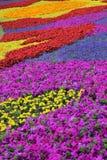 Blommaträdgård på epcot royaltyfri bild