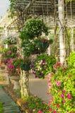 Blommaträdgården parkerar i Chiang Mai, Thailand arkivbilder