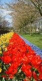 blommaträdgårdkeukenhof Arkivfoton