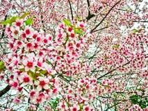 blommatree Royaltyfri Fotografi