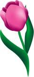 blommatulpan royaltyfri illustrationer