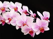 blommatunga Arkivfoto