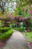 Blommatunnelen parkerar offentligt royaltyfria bilder