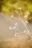 Blommaubon Arkivbild