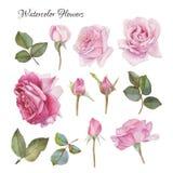 Blommauppsättning av hand drog vattenfärgrosor och sidor stock illustrationer
