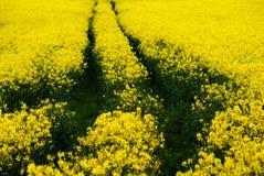 blommaväg Royaltyfri Fotografi