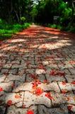 blommaväg Royaltyfri Foto