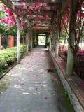 Blommaväg Royaltyfria Foton