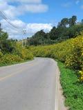 Blommaväg Fotografering för Bildbyråer