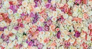 Blommaväggbakgrund med att förbluffa röda och vita rosor som gifta sig garnering, royaltyfri bild