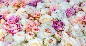 Blommaväggbakgrund med att förbluffa röda och vita rosor som gifta sig garnering, royaltyfria foton
