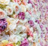 Blommaväggbakgrund med att förbluffa röda och vita rosor som gifta sig garnering arkivfoto