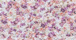 Blommaväggbakgrund med att förbluffa röda och vita rosor som gifta sig garnering, gjord hand - toning royaltyfria foton