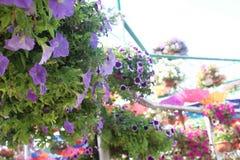 blommavärlden Royaltyfri Fotografi