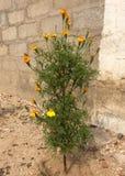 Blommaväxt royaltyfri fotografi
