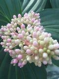 Blommaväxt Royaltyfria Bilder