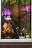 blommaväxter på fönstret Arkivfoton