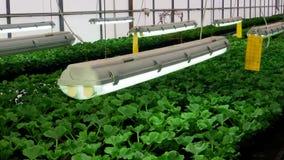 Blommaväxthus Växa dekorativt och blommor för landskapdesign och gåvor gröna växtkrukar lager videofilmer
