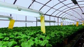 Blommaväxthus Växa dekorativt och blommor för landskapdesign och gåvor gröna växtkrukar stock video