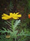blommaväxtpic arkivbild