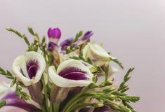 Blommavåren färgar naturen royaltyfri bild