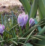 Blommavåren gör grön den trevliga naturen Luxembourg Fotografering för Bildbyråer