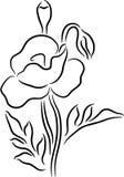blommavallmo royaltyfri illustrationer