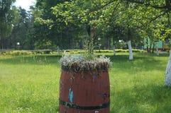 Blommavas i form av gamla trätrummor Arkivbild