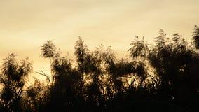 Blommavassgräs som flödar från vindslag på solnedgånghimmel arkivfilmer