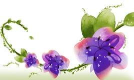 blommavattenfärg Royaltyfri Fotografi