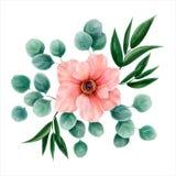 Blommavattenfärg, vektorillustration botanisk design Rosa färger a Royaltyfria Foton