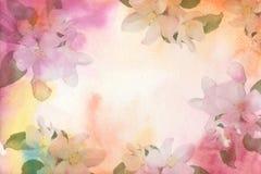 Blommavattenfärgbakgrund Blommor av äpplet Arkivbild