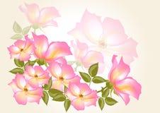 Blommavektorbakgrund med wild steg Vektor Illustrationer