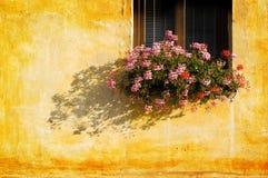 blommaväggfönster Fotografering för Bildbyråer