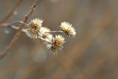 blommavinter Arkivfoton