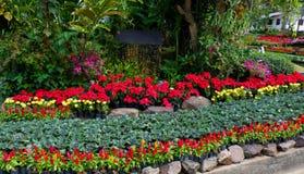 Blommavinter i trädgård Royaltyfria Bilder