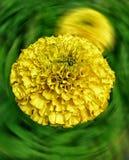 Blommavisning dess inre Royaltyfri Bild