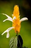 blommayellow arkivfoto