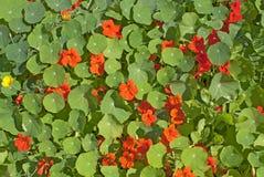 Blommig bakgrund arkivbild