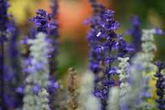 blommig harmoni Arkivfoto