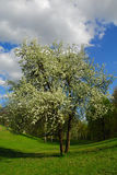 blommig tree Arkivfoton