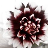 Blommig typ av dagen arkivbild