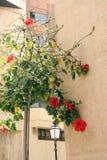 blommig vägg Arkivbild