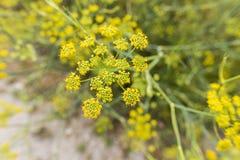 Blommig växtbakgrund Royaltyfria Bilder