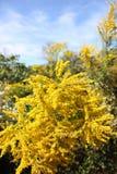 blommigt fält Royaltyfri Fotografi