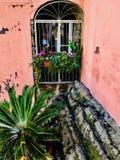 blommigt fönster royaltyfri fotografi