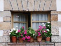 blommigt fönster arkivfoton