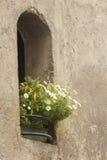 Blommigt hål Arkivbild