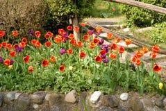 Blommigt hörn Fotografering för Bildbyråer