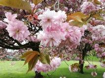 Blommigt träd i härlig trädgård Arkivbild
